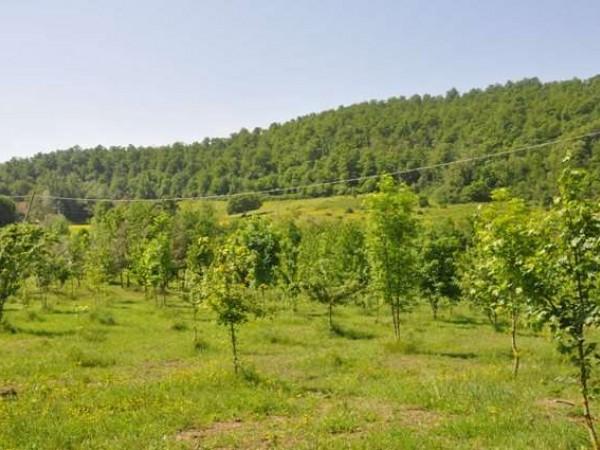 Appartamento in vendita a Marsciano, Con giardino, 360 mq - Foto 3