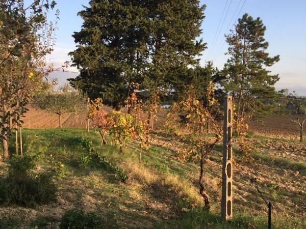 Rustico/Casale in affitto a Perugia, Collestrada, Con giardino, 100 mq - Foto 2