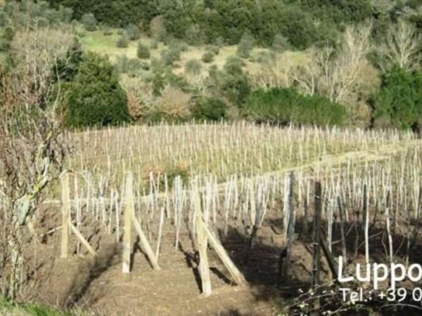 Villa in vendita a Castelnuovo Berardenga, Con giardino, 1000 mq - Foto 6