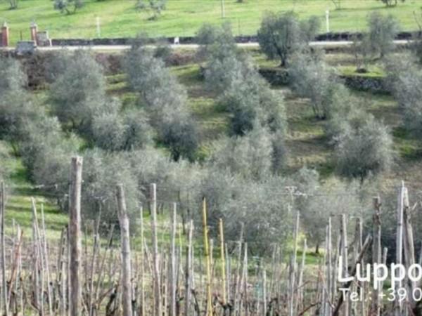 Villa in vendita a Castelnuovo Berardenga, Con giardino, 1000 mq - Foto 9