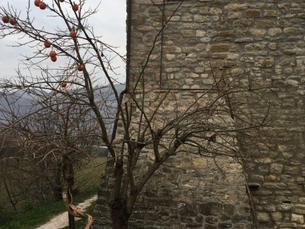 Rustico/Casale in vendita a Valfabbrica, 280 mq - Foto 22