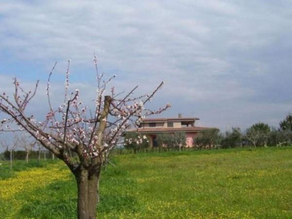 Villa in vendita a Pomezia, Con giardino, 400 mq - Foto 4