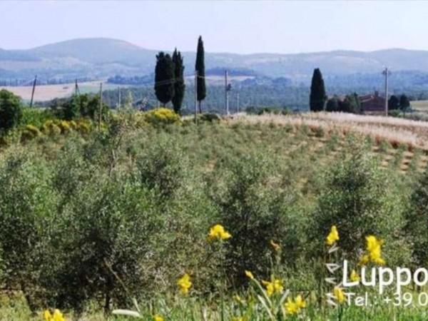Villa in vendita a Pienza, Con giardino, 200 mq - Foto 8