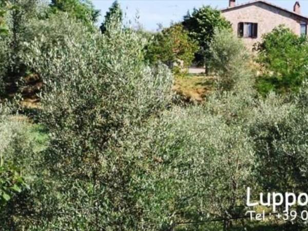 Villa in vendita a Pienza, Con giardino, 200 mq - Foto 7