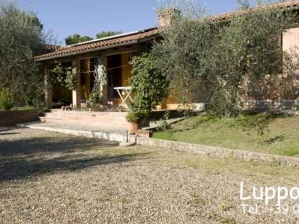 Villa in vendita a Castelnuovo Berardenga, Con giardino, 360 mq