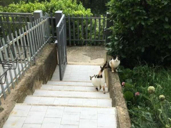 Appartamento in affitto a Perugia, Pretola, Arredato, con giardino, 65 mq - Foto 15