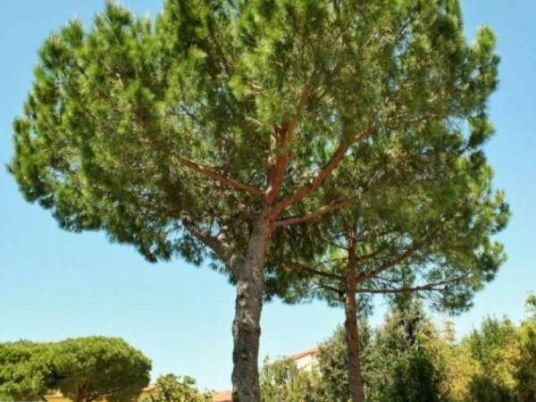 Immobile in vendita a Pisa, Piazza Dei Miracoli, Con giardino, 1600 mq - Foto 29