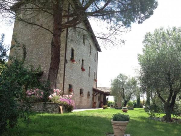Rustico/Casale in vendita a Ficulle, Con giardino, 450 mq - Foto 1