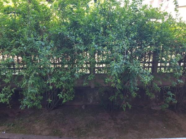 Appartamento in vendita a Gallarate, Caiello, Arredato, con giardino, 90 mq - Foto 10