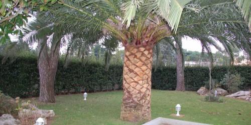 Villa in vendita a Martina Franca, Contada Paretone, Con giardino, 350 mq - Foto 7