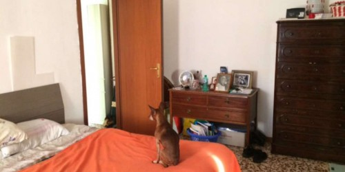 Appartamento in vendita a Cinisello Balsamo, 60 mq - Foto 16