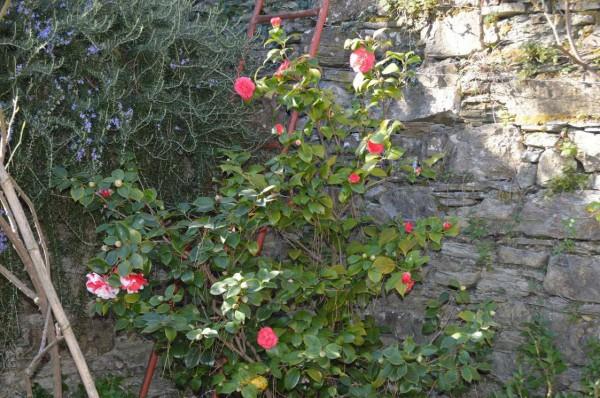 Appartamento in affitto a Recco, Megli, Arredato, con giardino, 70 mq - Foto 21