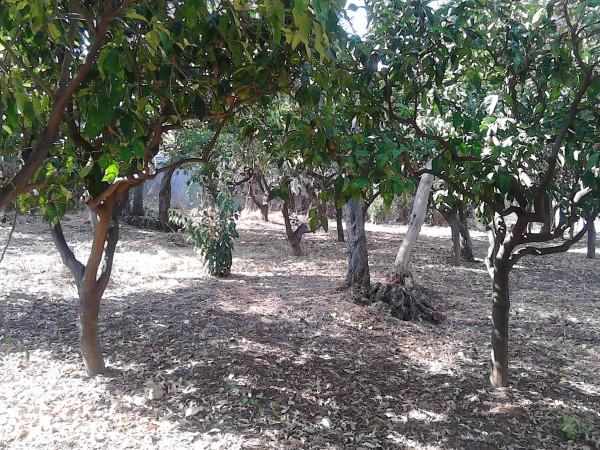 Casa indipendente in vendita a Sant'Agata di Militello, Limitrofa, Con giardino, 140 mq - Foto 4