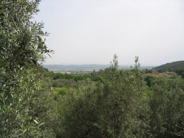Rustico/Casale in vendita a Campiglia Marittima, Paese, 150 mq - Foto 6
