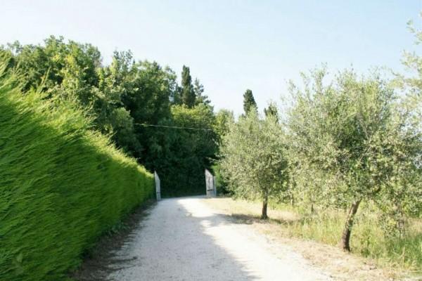 Casa indipendente in vendita a Bertinoro, Con giardino, 430 mq