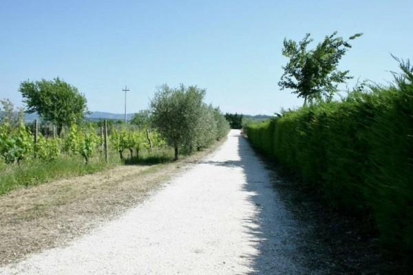 Casa indipendente in vendita a Bertinoro, Con giardino, 430 mq - Foto 3