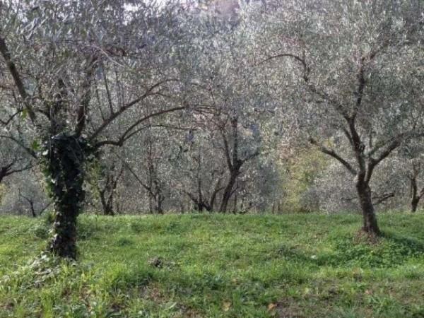 Casa indipendente in vendita a Arcola, Arredato, con giardino, 90 mq - Foto 2