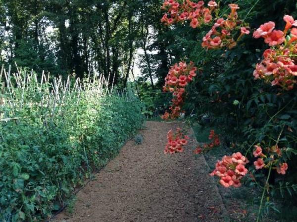 Casa indipendente in vendita a Lerici, Con giardino, 70 mq - Foto 8