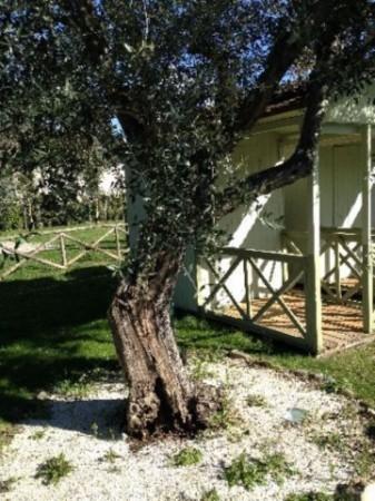Villa in vendita a Sarzana, Con giardino, 180 mq - Foto 5