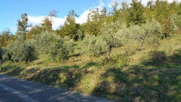 Casa indipendente in vendita a Licciana Nardi, Con giardino, 200 mq - Foto 7