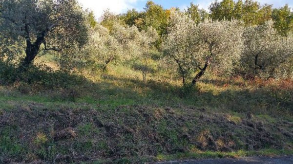 Casa indipendente in vendita a Licciana Nardi, Con giardino, 200 mq - Foto 6