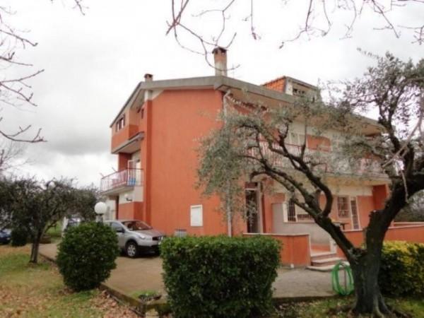 Appartamento in affitto a Ardea, Madonnina, Arredato, con giardino, 55 mq - Foto 2