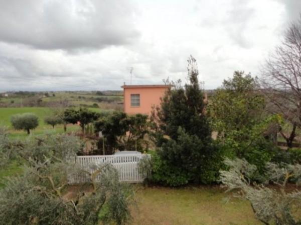 Appartamento in affitto a Ardea, Madonnina, Arredato, con giardino, 55 mq - Foto 3