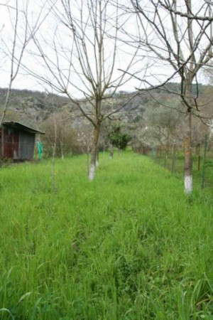 Villa in vendita a Santi Cosma e Damiano, Scauri, Con giardino, 166 mq - Foto 13