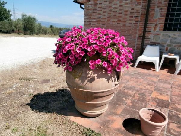 Rustico/Casale in vendita a Altopascio, 450 mq - Foto 11