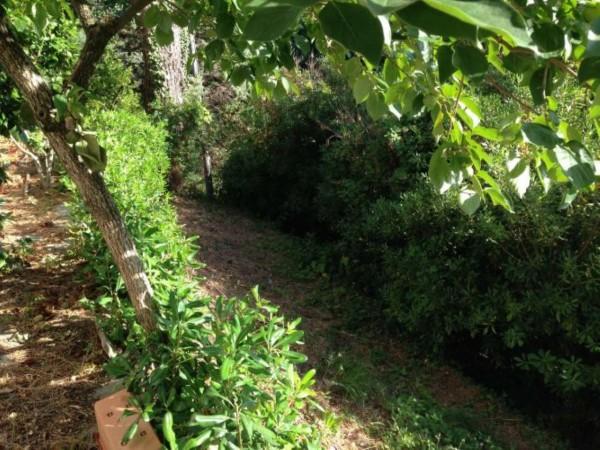 Casa indipendente in vendita a Arcola, Trebiano, Arredato, con giardino, 105 mq - Foto 19
