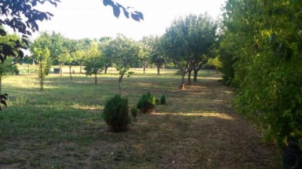 Villetta a schiera in vendita a Alessandria, Con giardino, 130 mq - Foto 15
