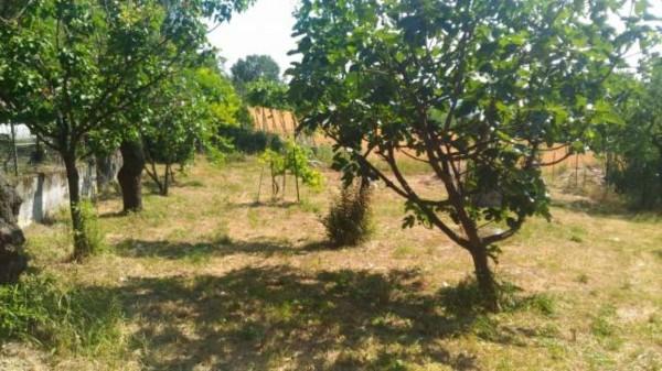 Casa indipendente in vendita a Alessandria, Valle San Bartolomeo, Con giardino, 160 mq - Foto 3