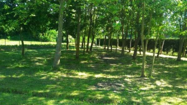 Villa in vendita a Alessandria, San Michele, Con giardino, 200 mq - Foto 9