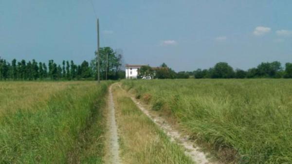 Rustico/Casale in vendita a Casal Cermelli, Con giardino, 140 mq - Foto 9