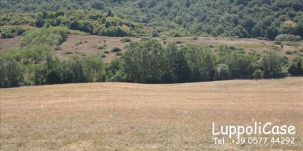 Villa in vendita a Asciano, 350 mq - Foto 4