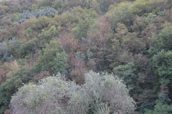 Appartamento in vendita a Avegno, Avegno, Con giardino, 70 mq - Foto 7