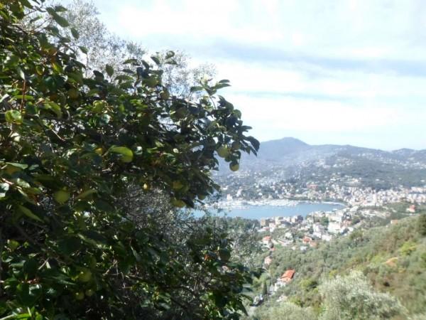 Villa in vendita a Zoagli, San Bernardo, Con giardino, 100 mq - Foto 7