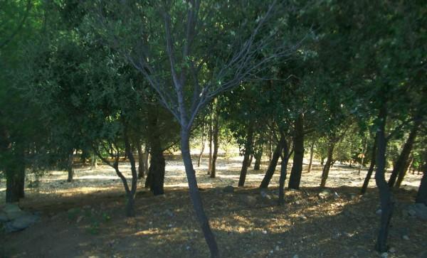 Villa in vendita a San Teodoro, Con giardino, 450 mq - Foto 10