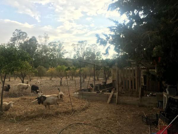 Rustico/Casale in vendita a Donori, Loc. Sa Corte Manna, Con giardino, 758 mq - Foto 20