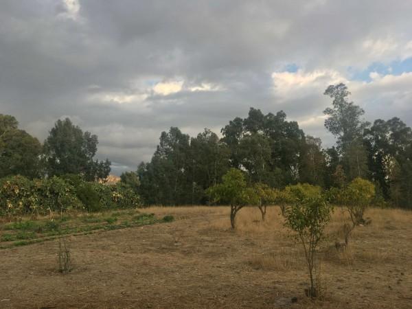 Rustico/Casale in vendita a Donori, Loc. Sa Corte Manna, Con giardino, 758 mq - Foto 22