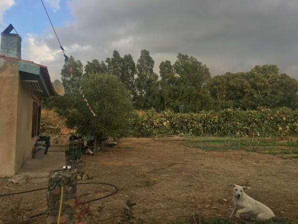 Rustico/Casale in vendita a Donori, Loc. Sa Corte Manna, Con giardino, 758 mq - Foto 24