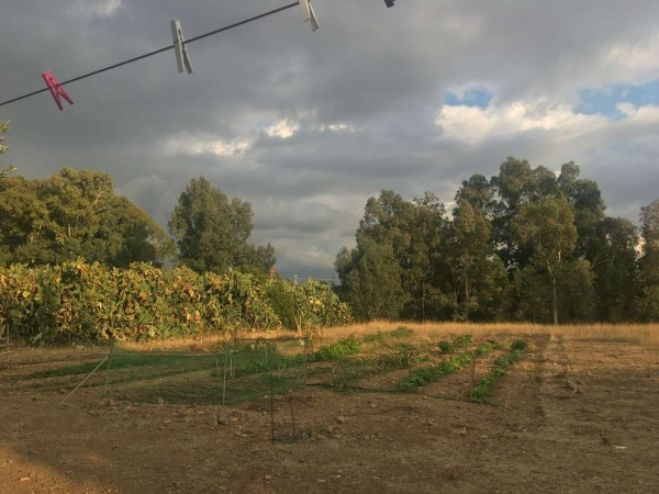 Rustico/Casale in vendita a Donori, Loc. Sa Corte Manna, Con giardino, 758 mq - Foto 30