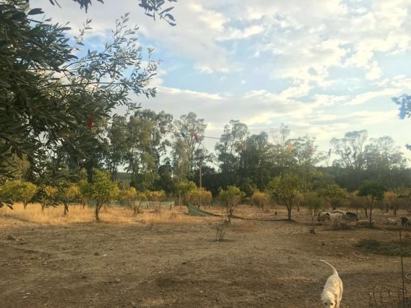 Rustico/Casale in vendita a Donori, Loc. Sa Corte Manna, Con giardino, 758 mq - Foto 32