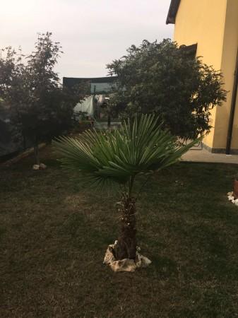 Villetta a schiera in vendita a Brembio, Con giardino, 130 mq - Foto 2