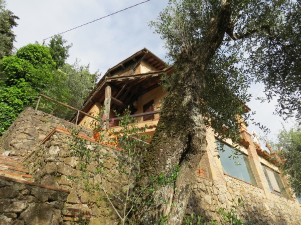 Locale Commerciale  in vendita a Camaiore, Collinare, Con giardino, 250 mq - Foto 33