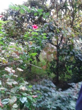 Casa indipendente in vendita a Sant'Agata di Militello, Centro, Con giardino, 600 mq - Foto 22