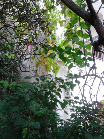 Casa indipendente in vendita a Sant'Agata di Militello, Centro, Con giardino, 600 mq - Foto 24