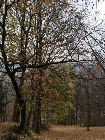 Rustico/Casale in vendita a Viù, Viu, Con giardino, 150 mq - Foto 12
