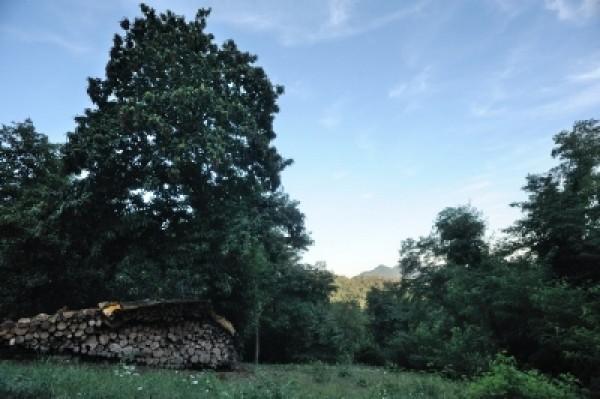 Rustico/Casale in vendita a Campomorone, Langasco, 460 mq - Foto 5