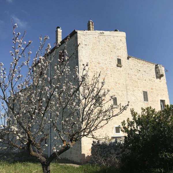Rustico/Casale in vendita a Conversano, Contrada Foggiali, Con giardino, 400 mq - Foto 8